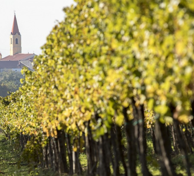 Brtonigla Wine Day