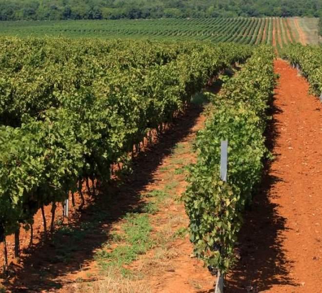Wine day - Dan vina